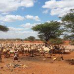 Concern Livestock Surge Model Development